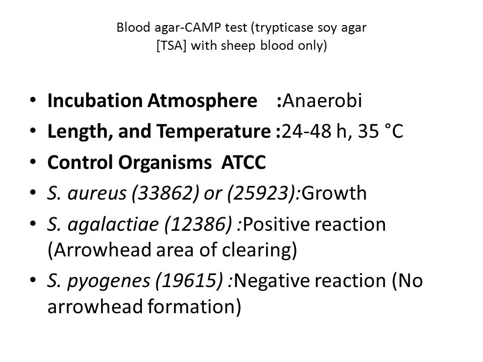 Blood agar-CAMP test (trypticase soy agar [TSA] with sheep blood only)